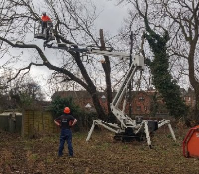 MEWP fallen willow removal 0