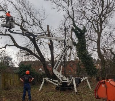 MEWP fallen willow removal 0a