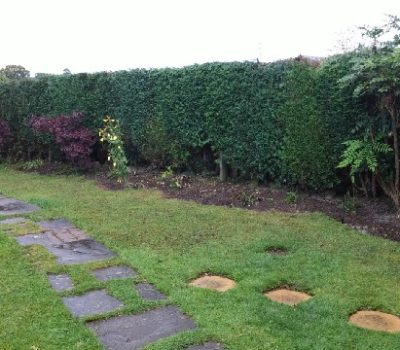 hedge reduction 0a